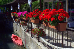 Red flowers and canoe Stock Photos