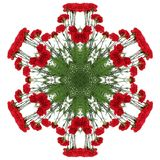 Red flowers carnations. In the form of a picture of a kaleidoscope Royalty Free Stock Photos