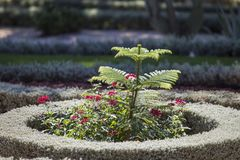 Red flowers in a circle of trimmed ornamental plants in a park o. N a blurred background of flower beds with flowers, lawns and green trees stock images