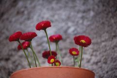 Red flowers royalty free stock photos