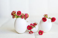 Red flowers in the eggshell Stock Photos