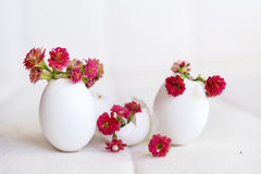Red flowers in the eggshell Stock Images