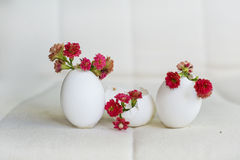 Red flowers in the eggshell Royalty Free Stock Photo
