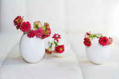 Red flowers in the eggshell Stock Photo