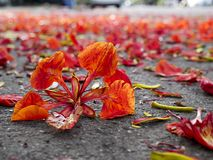 Red flowers falling on the ground, Autumn background concept.  royalty free stock photos