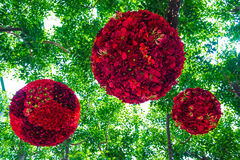 Red flowers in forest Stock Photography