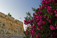 Red flowers and fortress walls with Greek flag Royalty Free Stock Photography