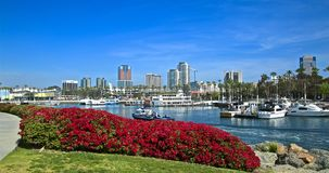 Long Beach California cityscape skyline. Red flowers frame Long Beach Harbor with cityscape skyline in background stock photo