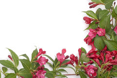 Red flowers frame over white Royalty Free Stock Photos