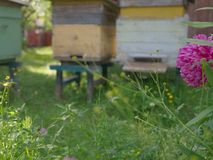 Beehives and Flowers. Red flowers in front of the beehives stock image