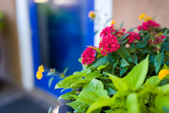 Red flowers in Front of a Blue Santa Fe Gallery Door Stock Image