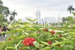 Red flowers in front of white palace stock image