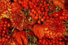 Red flowers, fruits & tomatoes Stock Photography