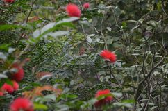 Red flowers in garden stock photography