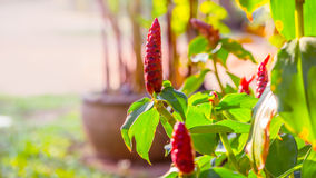 Red flowers in the garden in the evening - stock image. Royalty Free Stock Photos
