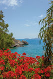 Red flowers of geraniums, Crete Island Stock Photography