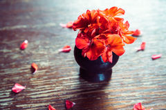 Red flowers geraniums on a wooden table Stock Image