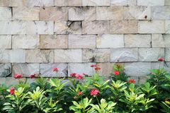 Red flowers and granite brick wall. Background Royalty Free Stock Photo