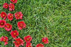 Red flowers with grass Stock Photography