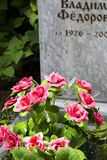 Red flowers on the grave. Stock Photography