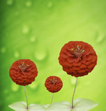 Red flowers on a green background. Stock Photography