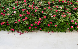 Red flowers on green bush plants Royalty Free Stock Image