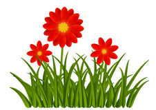 Red flowers with green grass Stock Photo