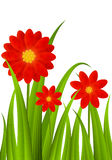 Red flowers on green grass Royalty Free Stock Image