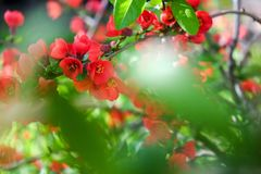 Red Flowers with green leafs. On a blue sky background royalty free stock image