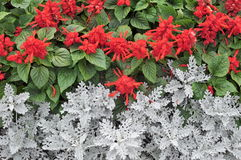 Red Flowers and Green Leaves Royalty Free Stock Photos