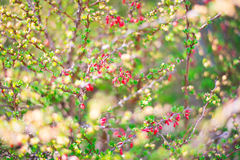 Red flowers and green leaves. Shoot in Hamilton, Ontario, Canada Stock Photo