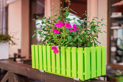 Red flowers in green pot. Red flowers in a green pot on a similar fence on the windowsill stock photography