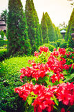 Red flowers and green trees in a tropical garden, Thailand. Selective focus, toned stock photography