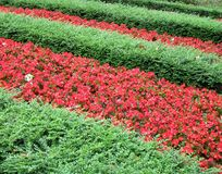 Red flowers heap, green leafs line, nature, Stock Image