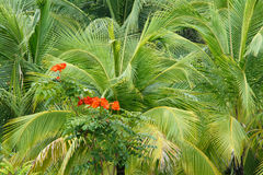 Red flowers in hemp palm leaves Stock Photo