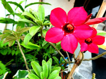 Red flowers in home garden. The fall garden flowers in a beautiful house royalty free stock photography