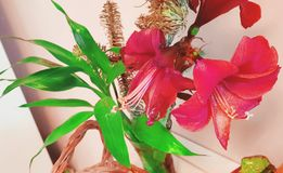 Red flowers at home. Interior decoration. Leafs and flowers stock photography