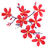 Red flowers isolated on white Royalty Free Stock Photo