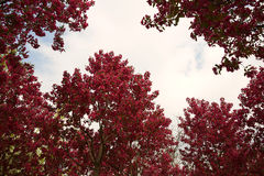 Red flowers and leaves Royalty Free Stock Photos