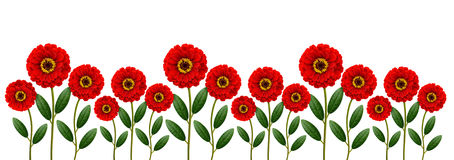 Red flowers line. Isolated on white royalty free stock photography