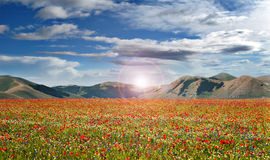 Red flowers magic landscape Royalty Free Stock Photography