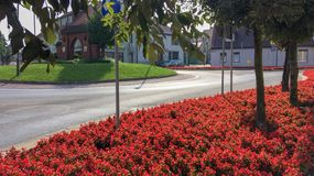 Red flowers. Many bright red flowers, many bright red flowers, autumn flowers, rows of bright plants on a city flowerbed Royalty Free Stock Photography
