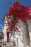 Red flowers on medieval white house, island of Mykonos, Greece Royalty Free Stock Photos