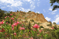 Red flowers in mountains Stock Image