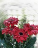 Red flowers. Moving stock images