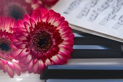 Red flowers and music book on a piano keyboard royalty free stock images