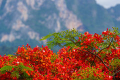 Red flowers in nature Stock Photography
