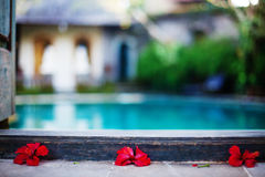 Red flowers near swimming pool. Red flowers on floor near swimming pool with blue water Royalty Free Stock Photography