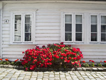 Red flowers outside   wooden house in Norway, Stock Photography