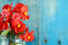 Red flowers over blue background Stock Photos